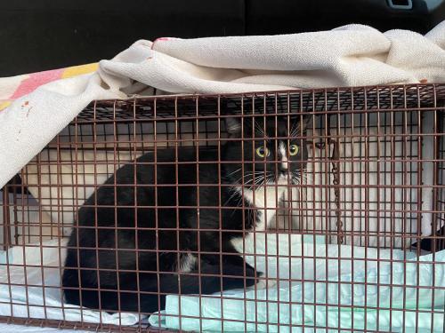 Lost Male Cat last seen Windrush Loop, Chattanooga, TN 37421