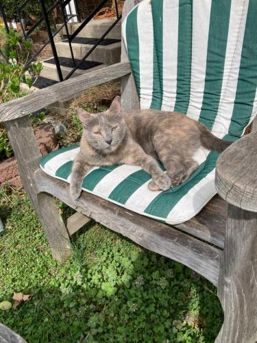 Lost Female Cat last seen Near Connecticut Avenue, Silver Spring, MD, Silver Spring, MD 20906