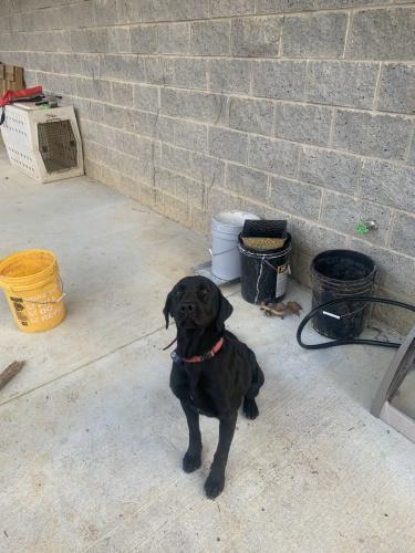 Lost Male Dog last seen Coker circle and mason drive, Red Bank, TN 37415