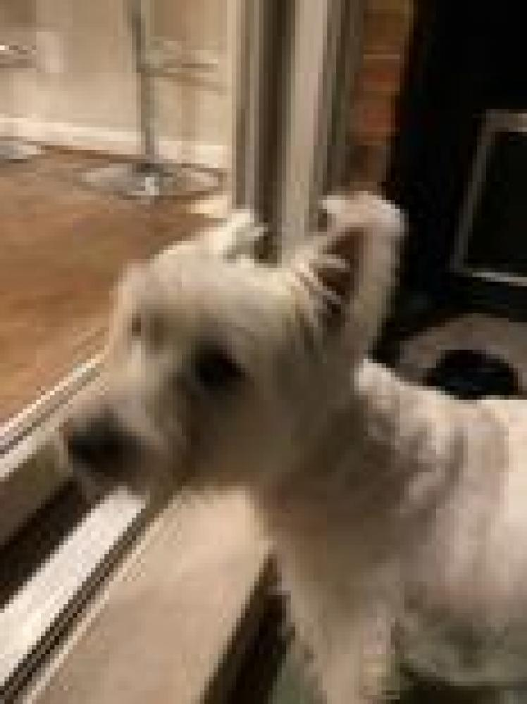 Shelter Stray Unknown Dog last seen Falls Church, VA 22041, Fairfax, VA 22032