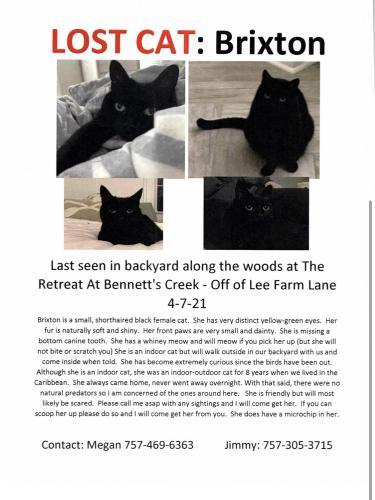 Lost Female Cat last seen The retreat at bennetts creek , Suffolk, VA 23435