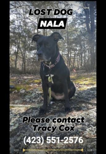 Lost Female Dog last seen East brainerd rd near Banks rd., Chattanooga, TN 37421