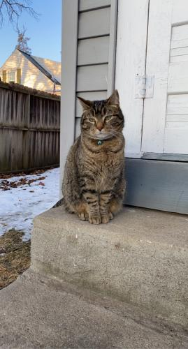 Lost Male Cat last seen Bethany Lutheran Church, Rochester, MN 55904