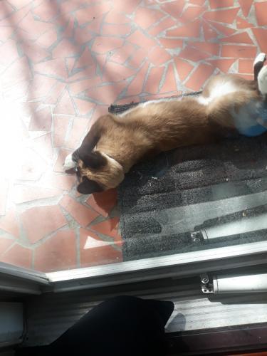 Found/Stray Female Cat last seen Flordia ave , Portsmouth, VA 23523