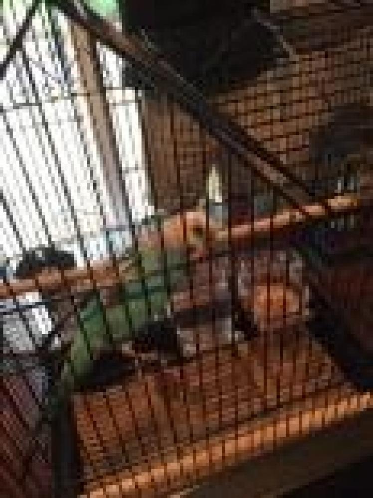 Shelter Stray Unknown Parakeet (budgie) last seen Oakton, VA 22124, Fairfax, VA 22032
