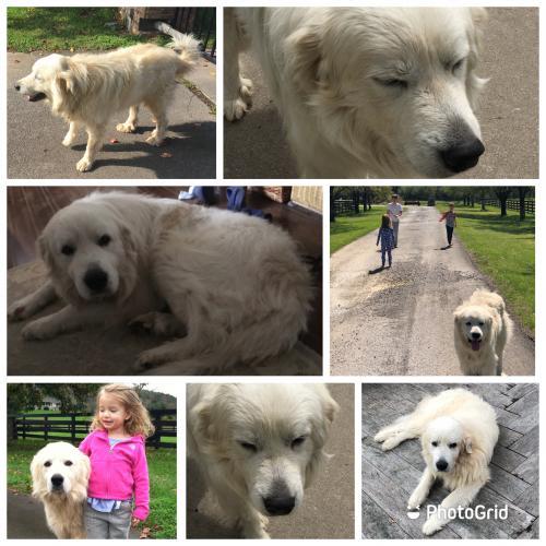 Lost Male Dog last seen Georgetown, TN, Georgetown, TN 37336