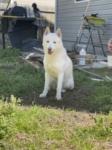 Lost Male Dog last seen By manny's burgers, Norfolk, VA 23509