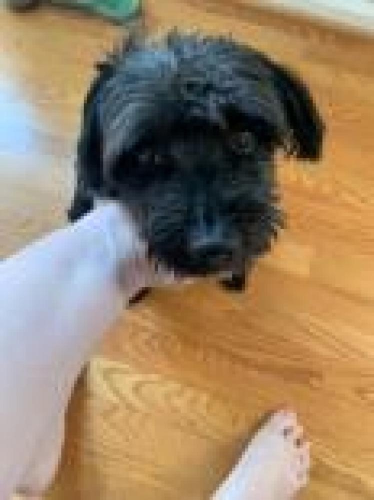 Shelter Stray Male Dog last seen Springfield, VA 22153, Fairfax, VA 22032