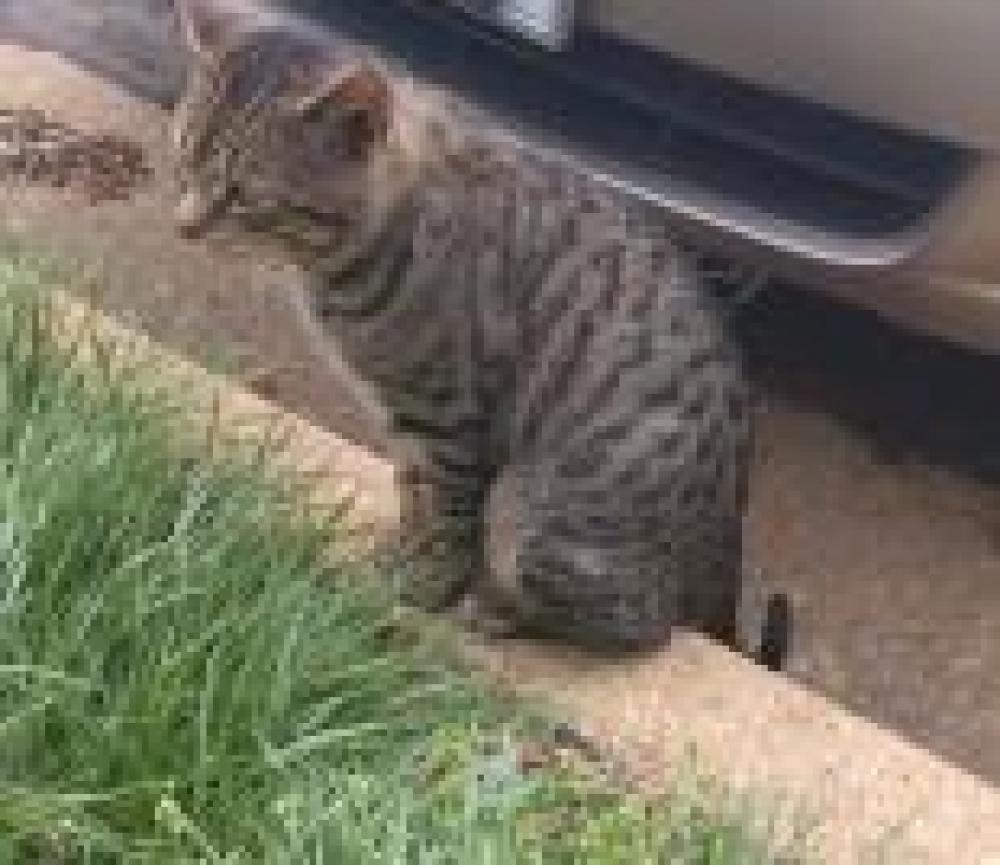 Shelter Stray Male Cat last seen Vienna, VA 22180, Fairfax, VA 22032