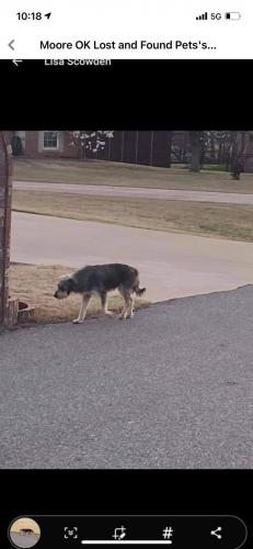 Lost Male Dog last seen 4th street at Wyndemere addition, Moore, OK 73160