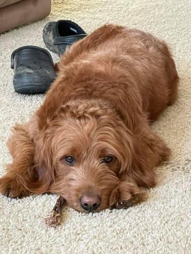 Lost Female Dog last seen Huntley Meadows, Alexandria, VA 22306