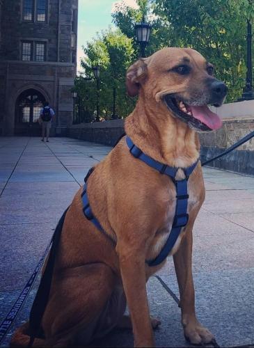 Lost Female Dog last seen Queen St, Alexandria, VA 22314