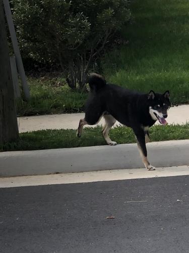 Found/Stray Unknown Dog last seen Milburn Street, Fairfax, VA 22030