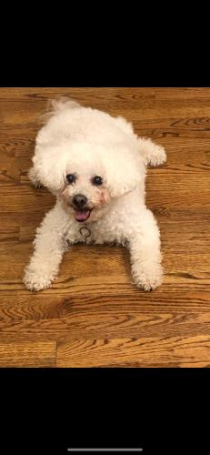 Lost Male Dog last seen Langley Oaks Park, McLean VA , McLean, VA 22101