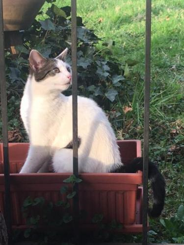 Found/Stray Unknown Cat last seen Charles Rd and Bennion Rd, Wheaton-Glenmont, MD 20906