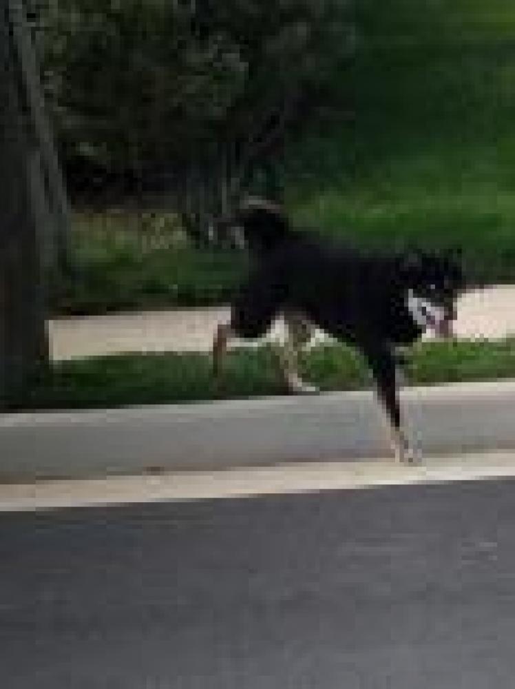 Shelter Stray Unknown Dog last seen Fairfax, VA 22030, Fairfax, VA 22032