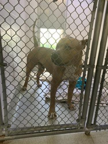 Found/Stray Male Dog last seen Alexandria, VA, Alexandria, VA 22314