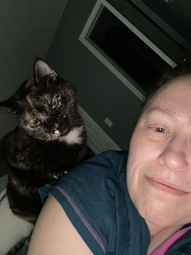Lost Female Cat last seen Near 38th street nw, Washington, D.C., DC 20016
