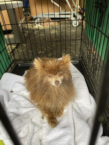 Found/Stray Unknown Dog last seen DAV, Newport News, VA 23608