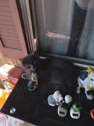 Lost Male Cat last seen Wilroy Rd, Suffolk, VA 23434