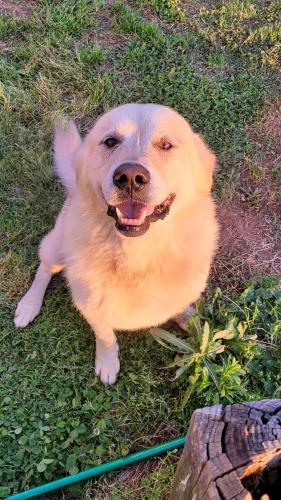 Found/Stray Male Dog last seen Near MURPH RD, Pauline, SC 29374