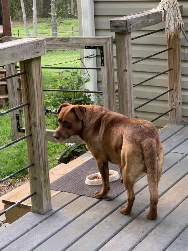 Found/Stray Male Dog last seen Old Furnace and Hwy 221, Cherokee Springs, SC 29323