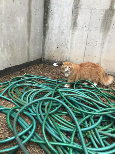 Found/Stray Unknown Cat last seen Rolfe st and 14th St N, Arlington, VA 22209