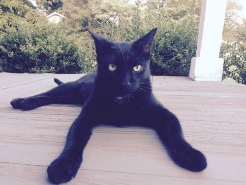 Lost Male Cat last seen Near moyock elementary and possibly farm stand near my house off shingle landing rd, Moyock, NC 27958