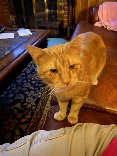 Lost Female Cat last seen Dupre Drive, Spartanburg, SC 29307