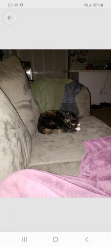 Lost Female Cat last seen Wiloughby bay military housing , Norfolk, VA 23503