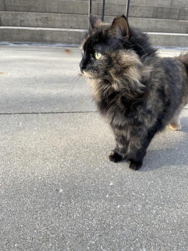Found/Stray Unknown Cat last seen First Presbyterian Church, Rochester, MN 55902