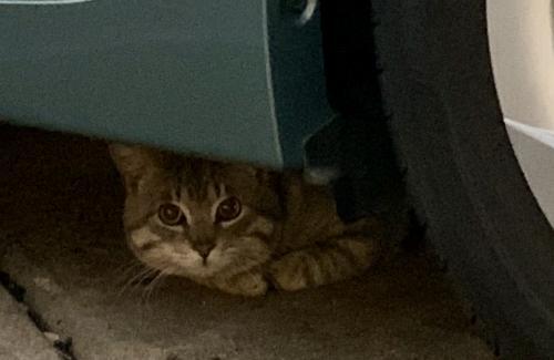 Found/Stray Unknown Cat last seen 18th  And Baltic Avenue, Virginia Beach, VA 23451