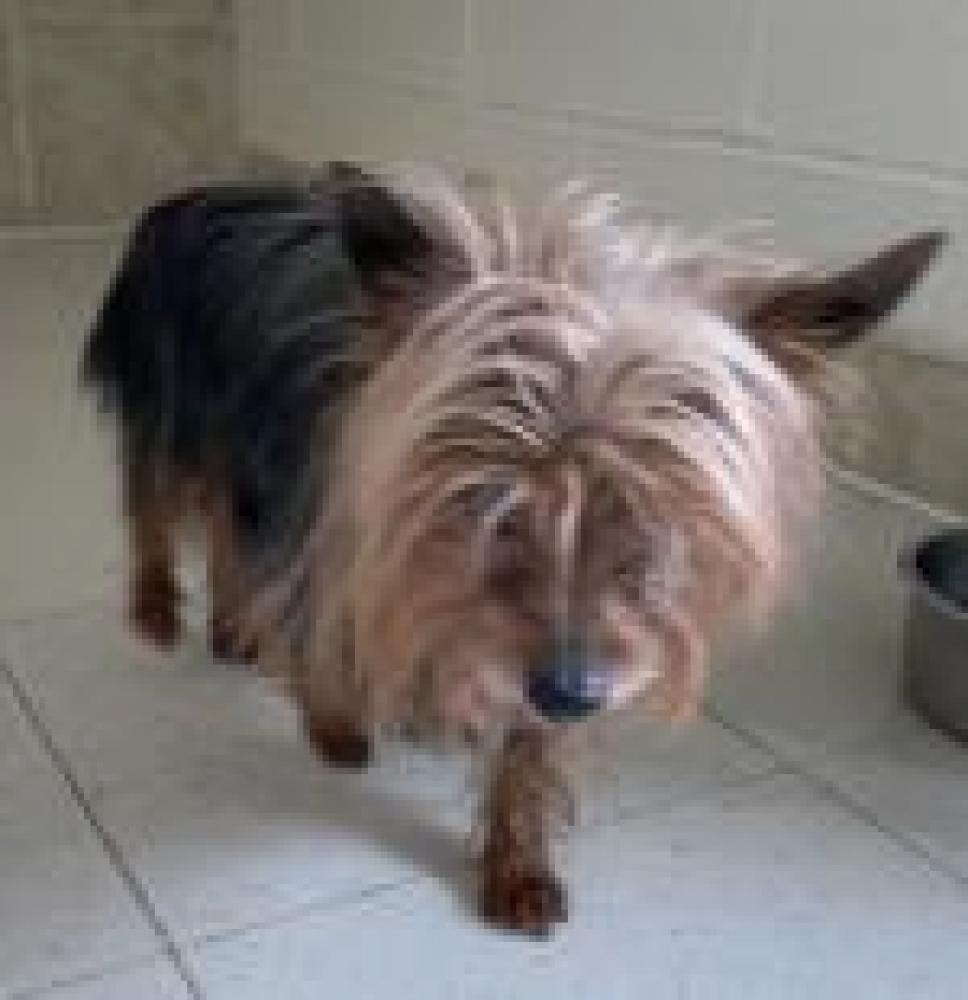 Shelter Stray Male Dog last seen Sterling, VA 20164, Fairfax, VA 22032