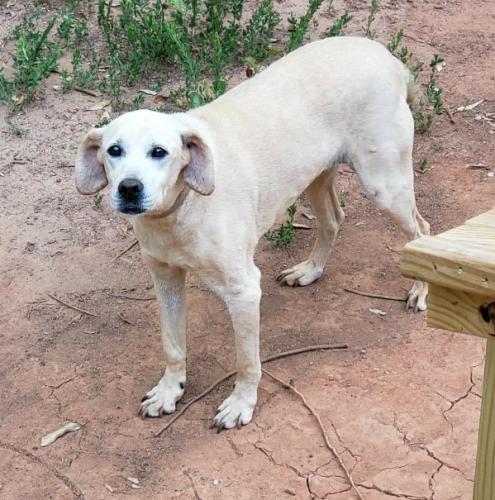 Lost Female Dog last seen Bumblebee Lane, Wellford, S.C., Spartanburg County, SC 29385