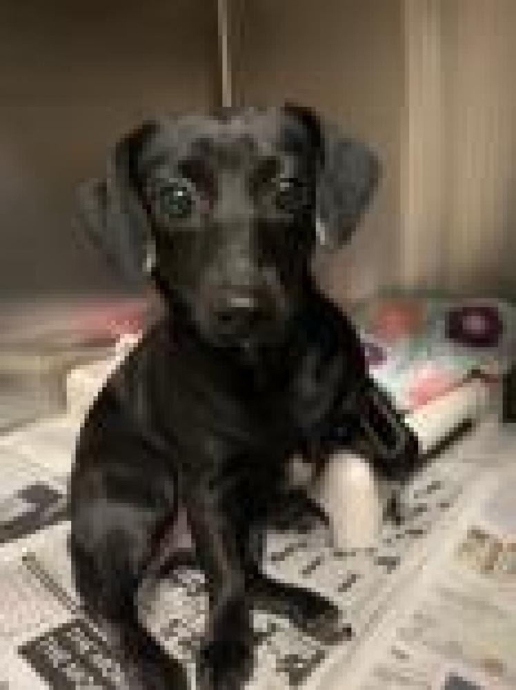 Shelter Stray Female Dog last seen Anderson, SC 29624, Anderson, SC 29622