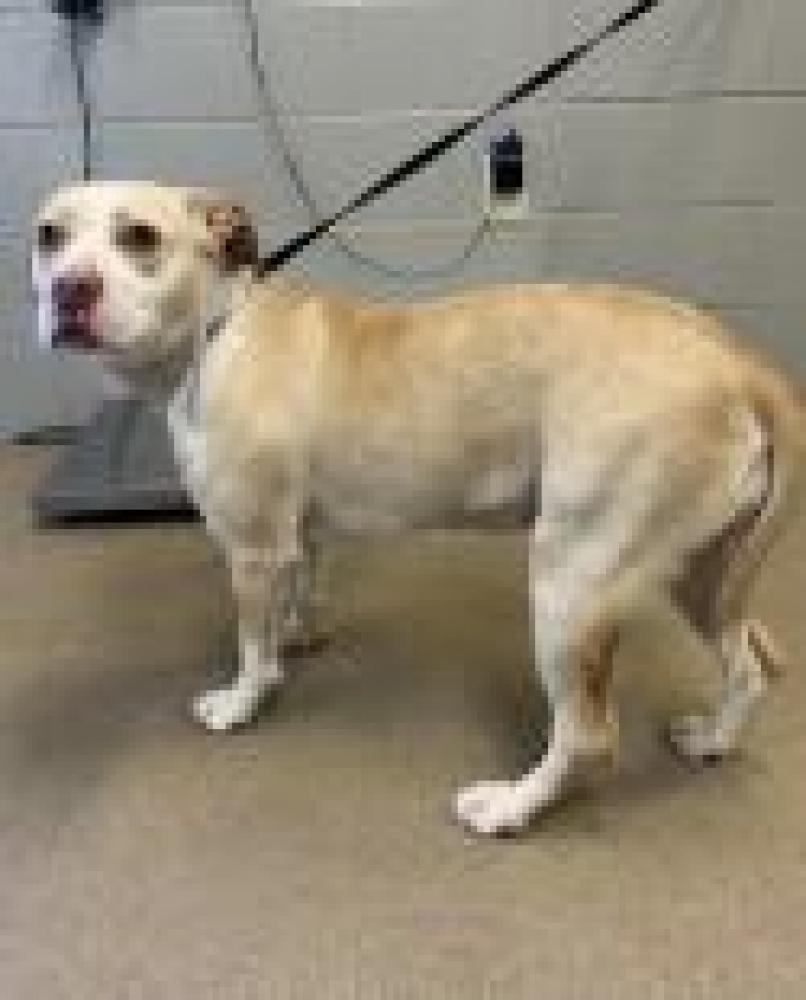 Shelter Stray Female Dog last seen Williamston, SC 29697, Anderson, SC 29622