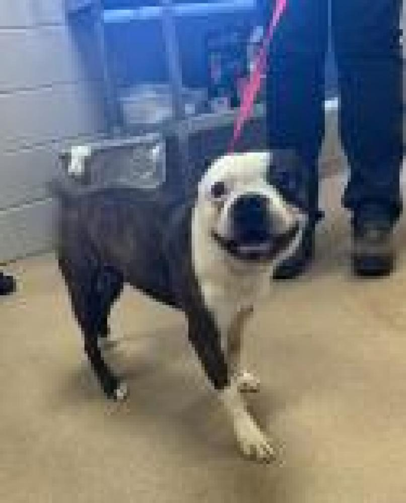 Shelter Stray Male Dog last seen Anderson County, SC 29625, Anderson, SC 29622