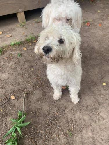 Found/Stray Unknown Dog last seen Veterans Memorial & West Rd, Houston, TX 77038