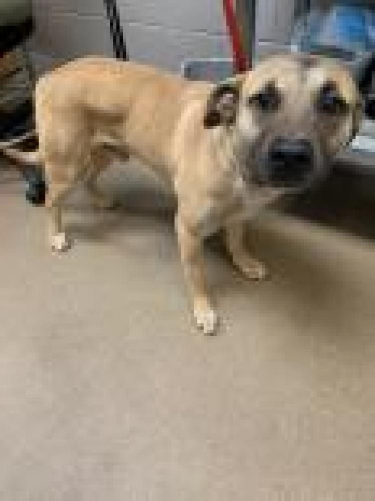 Shelter Stray Male Dog last seen Anderson County, SC 29627, Anderson, SC 29622
