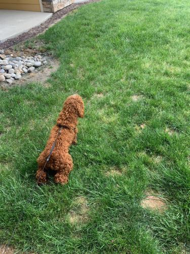 Lost Male Dog last seen Intersection of Kiwanis loop and  Centennial Circle , Virginia Beach, VA 23456