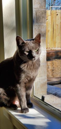 Lost Female Cat last seen Briar Hills Parkway, Houston, TX 77077