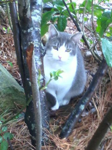 Lost Male Cat last seen Golden Oaks Lane, Chesapeake, VA 23321