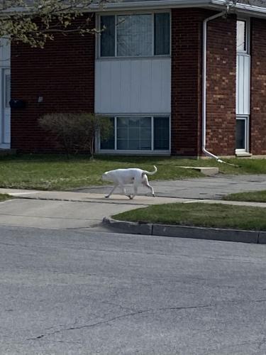Found/Stray Male Dog last seen Northwest dental group, Rochester, MN 55901