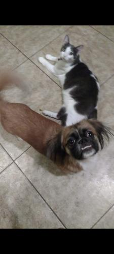 Lost Unknown Dog last seen Commonwealth Place, Chandler, AZ 85225