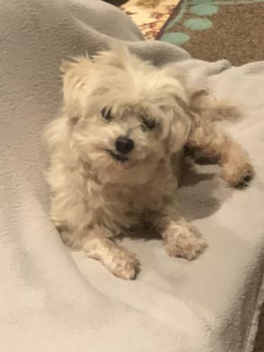 Lost Female Dog last seen Marine Ave / Lemoli Street , Hawthorne, CA 90250