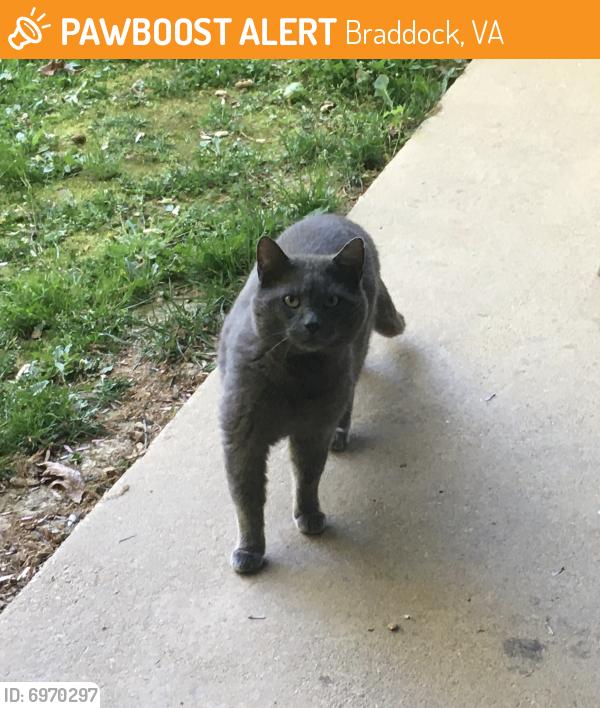 Found/Stray Unknown Cat last seen Galsworth Court/Richardson , Braddock, VA 22032