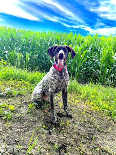 Lost Female Dog last seen NE 74th Ave West Concord, MN  55985 United States, Concord Township, MN 55985