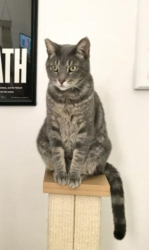 Lost Male Cat last seen W 30th Street and Royal Palm, Miami Beach, FL 33140