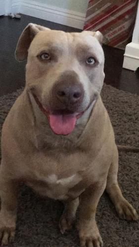 Lost Male Dog last seen Near Webb Avenue , Los Angeles, CA 91605