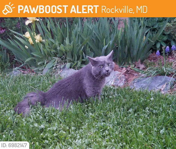 Found/Stray Unknown Cat last seen Intersection of Aspen Hill and Veirs Mill, Rockville, MD 20853